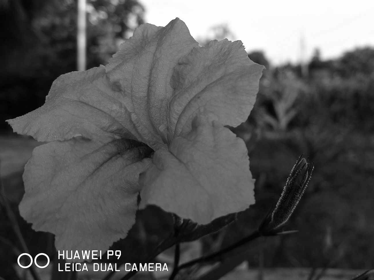 Đón ánh bình minh tháng 9 Huawei p9 Leica Dual Camera