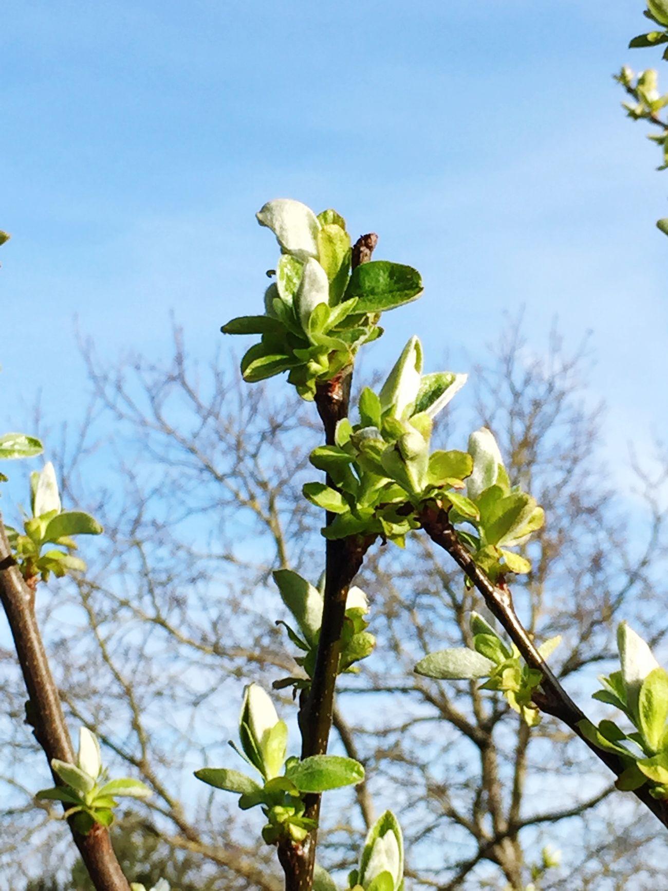 Spring Springtime Taking Photos Bodensee