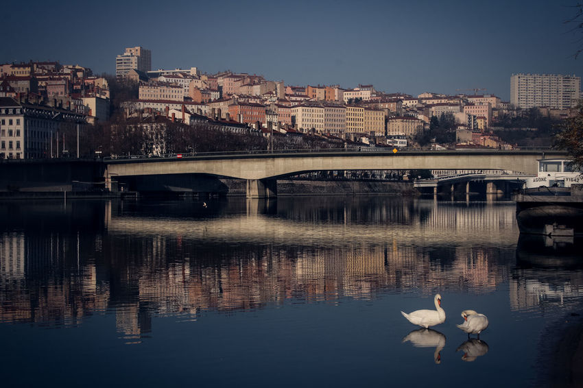 City Rhône Animal Themes Animals In The Wild Architecture Bird Boat Bridge Bridge - Man Made Structure Building Exterior Built Structure City Clear Sky Connection Day Nature No People Outdoors Reflection River Sky Swan Water Waterfront Croix Rousse