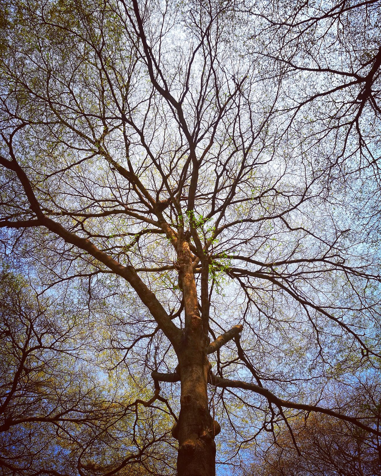 Branch Tree Nature Low Angle View Branch Growth Beauty In Nature Alone All_shots Thailand_allshots Streetphotography Thailand P9 Oo Bangkok, Thailand