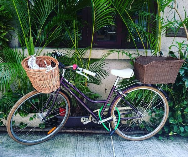Bicycle Transportation Mode Of Transport Outdoors Tranquility Urban Urban Transportation Fixie Fixedgear Fixie/fixed Gear Fixiegear HongKong Happiness Tranquil Scene Lieblingsteil