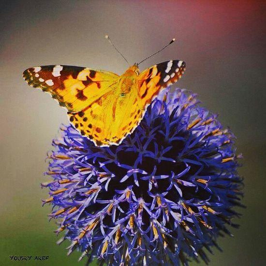 Bonjour Oldenburg Betterfly Macro Macro_collection Closeup