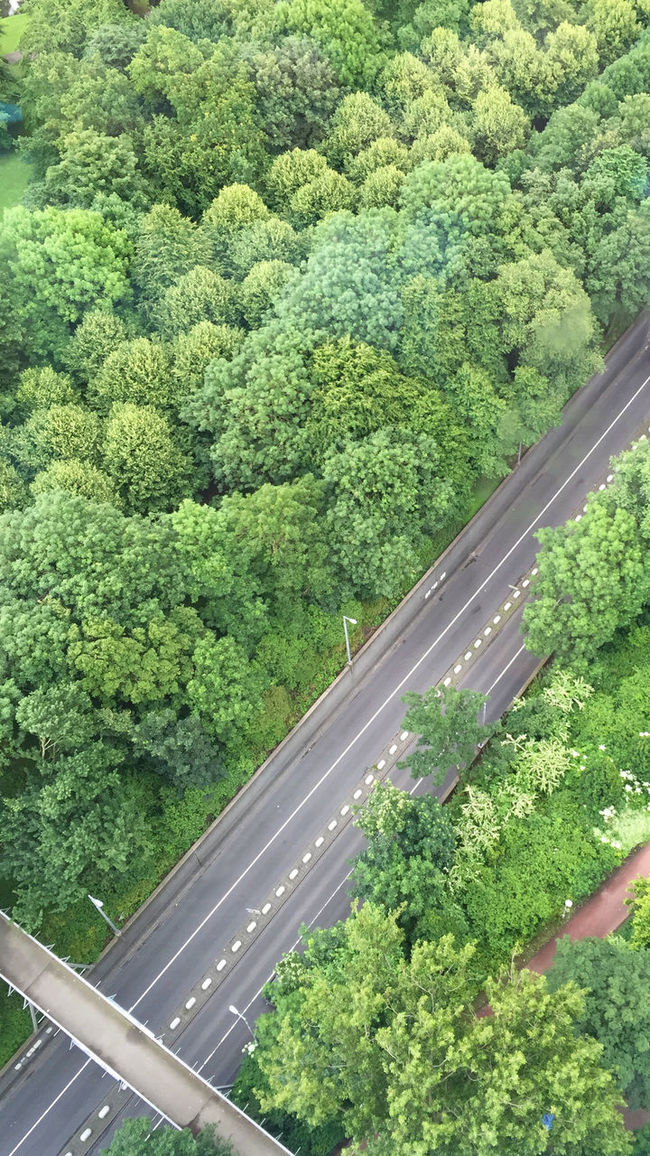 from up high Aerial View Beauty In Nature Green Growth High Angle View Journey Nature Outdoors Plant Road Scenics Transportation Tree Treetop Birdseyeview A Birds Eye View Street Photography EE Love Connection! EyeEm Best Shots Eye4photography  Nature Photography Eeyem Photography Nature_collection Leaves Taking Photos