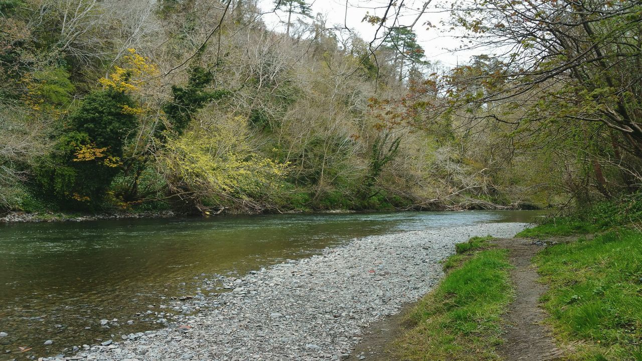 The River ... Newtown Powys Spring Today Wales река Water берег Hafren Severn Sabrina Riverside Nature Naturaleza Primavera весна