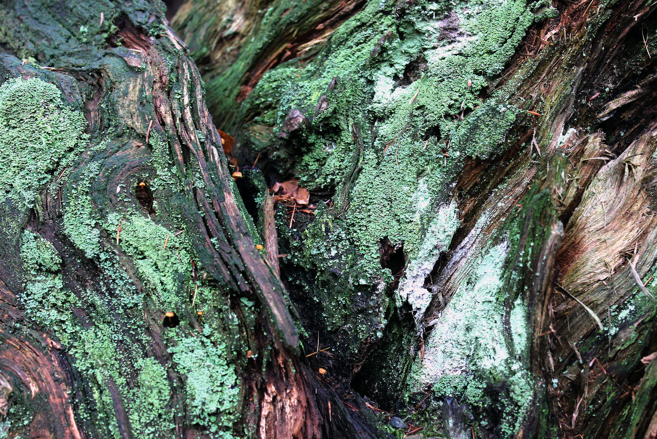 Abstract Backgrounds Close-up Colorful Day Deadwood  Full Frame Moss Nature No People Outdoors Textured  Tree Wood
