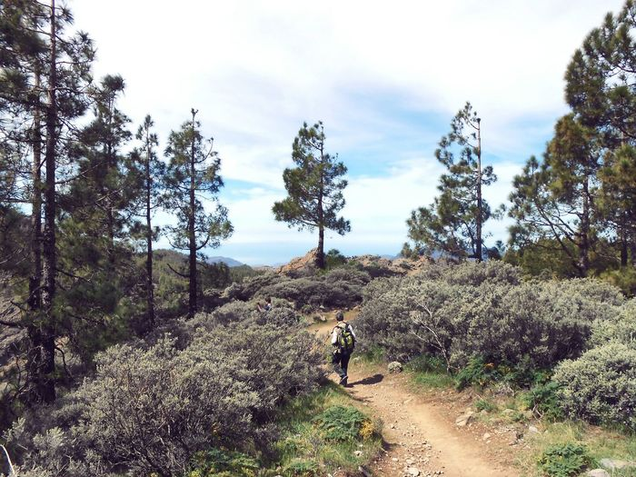 Celebrating Earthday , then Worldbookday & Openlysecular day Gran Canaria Pine Trees Canary Islands Walking Holiday Some Time Ago Trees