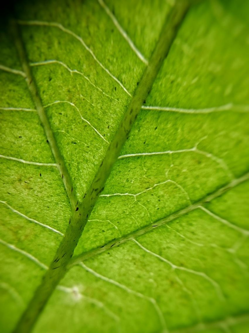 Pure green Eye4photography  EyeEm Best Shots Naturelovers Mobilephotography Sony Xperia Z3 Macro Somelovestoriesneverdie Autumn Leaf Enjoying Life