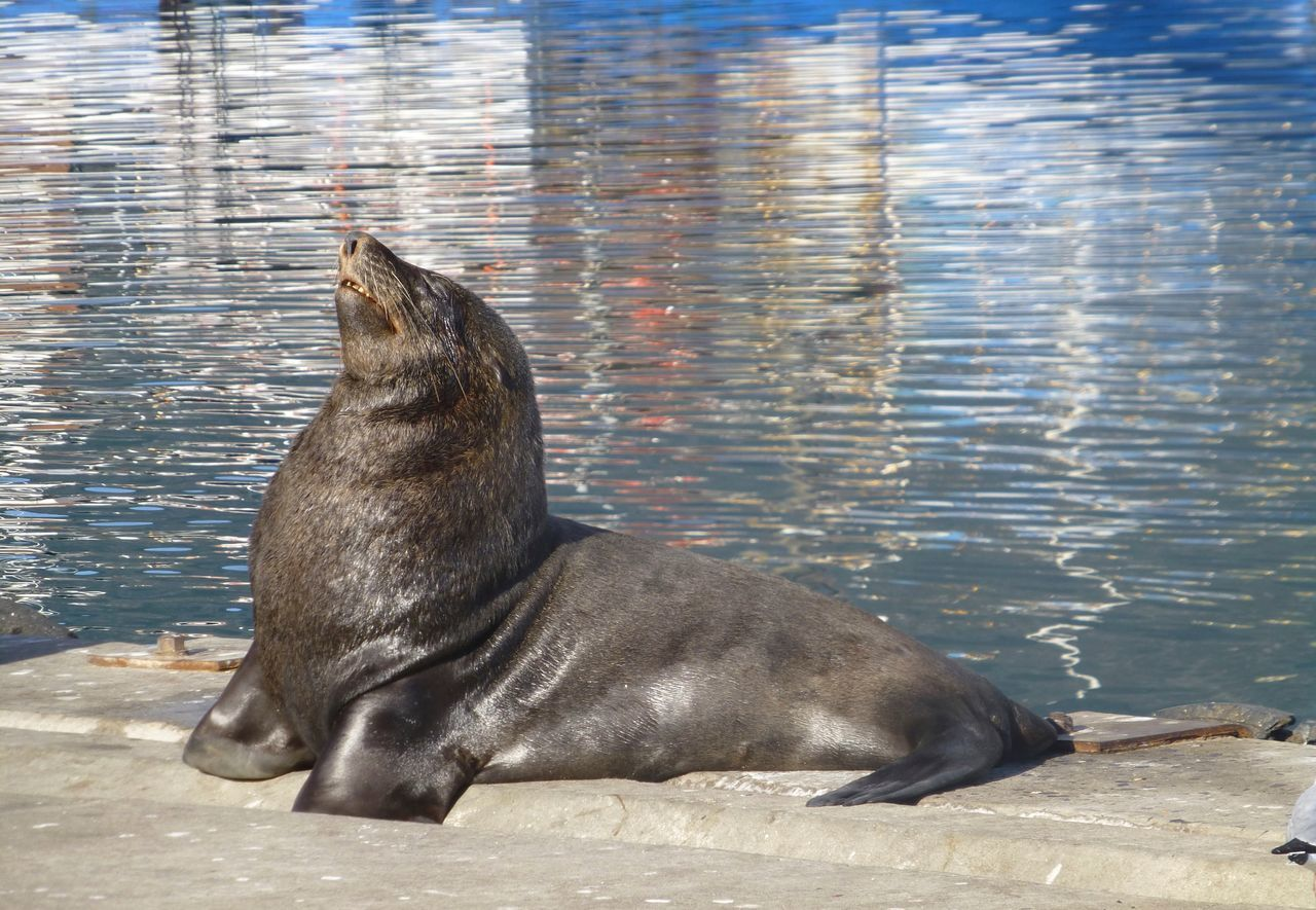 Hout Bay South Africa Seals Seals On The Dock Seals Chilling Sea And Sky Reflections In The Water Look At Me! Look At Me Harbour Seals Posing Basking Basking In The Sun Teeth Nature Wildlife Wildlife & Nature Poser Animal Animals Animal Photography Perfect Nature Beautiful Nature