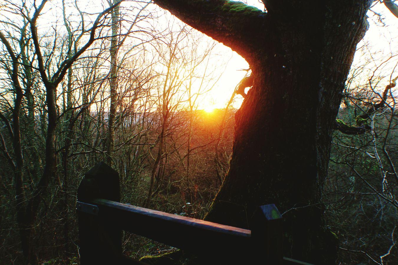 The sun setting on a glorious walk. Hareshaw Linn
