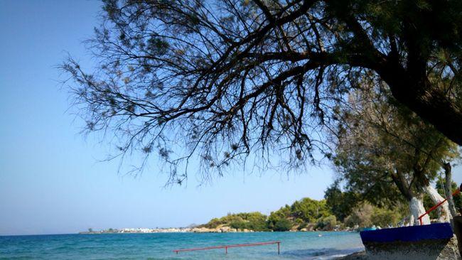 Tamarisk Tree Tree Branches Beach Beach Photography Hidden Gems  Tranquil Scene Sea Seascape Bench Plants Nature Nature Photography Nature_collection