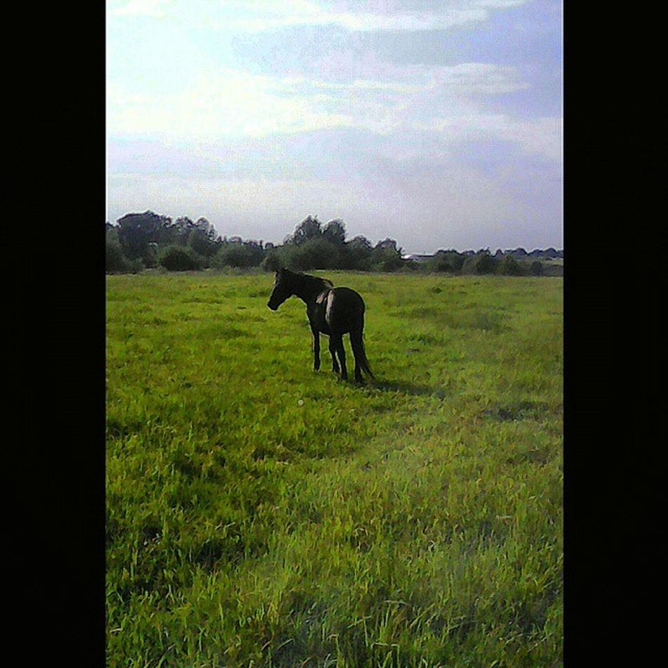 Squareinstapic КСКГармония Ослик НаВыпасе Лошадь ЛошадьНаВыпасе ЯЛюблюЛошадей Donkey PhotoSpam HorseLovers Horse HorseLoversClub НаВыпасе КЛЛ ЧастнаяКонюшня ЛюбителямПрироды ЛюблюЛошадей ЛюбителямЛошадей Animals DomesticAnimals HorseForse AnimalLovers ЧернаяЛошадь ЧерныйКонь BlackHorse Архив2015ОК_