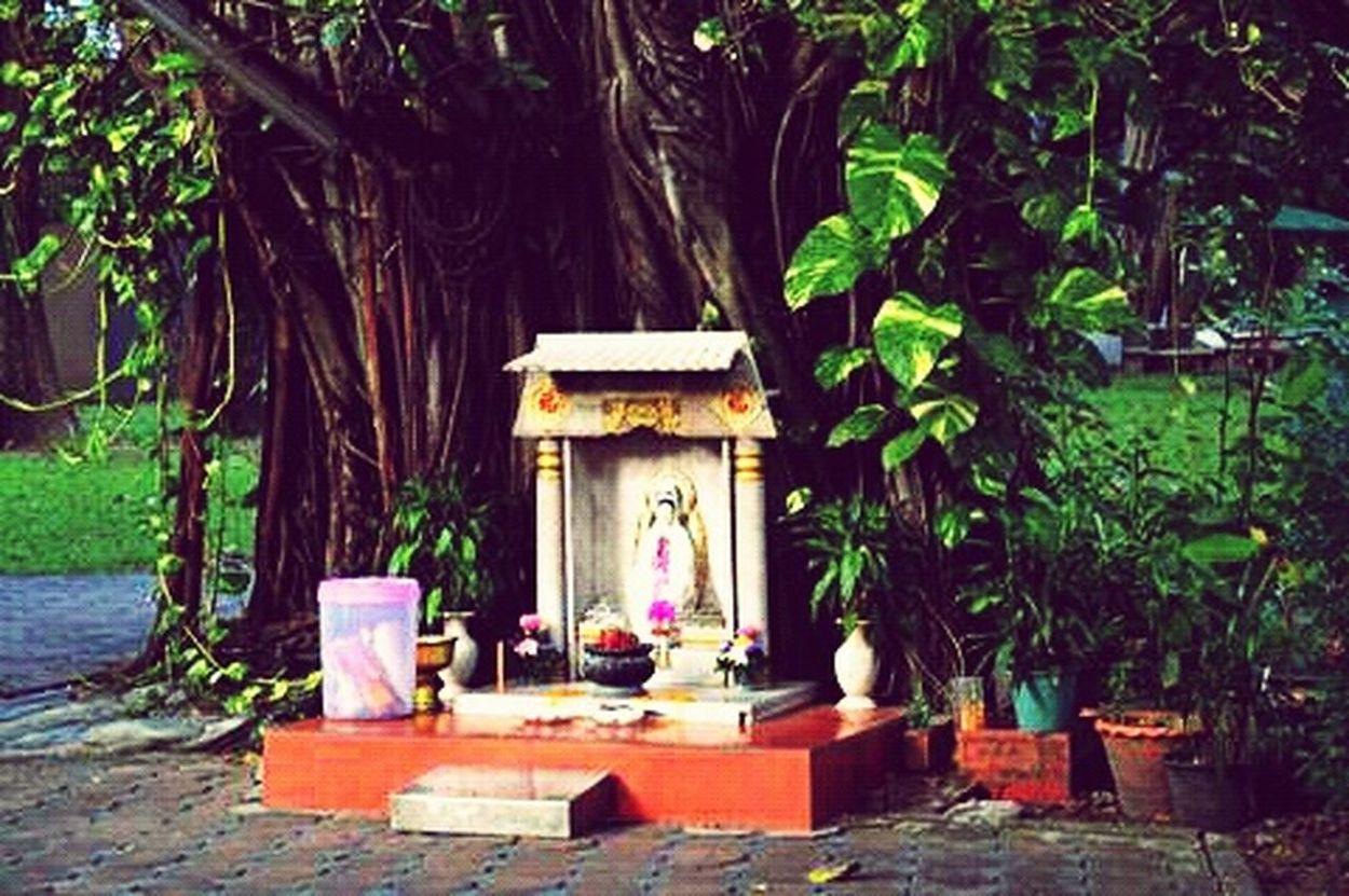 Bangkok Tailand Lumpini Park Trees Shrine