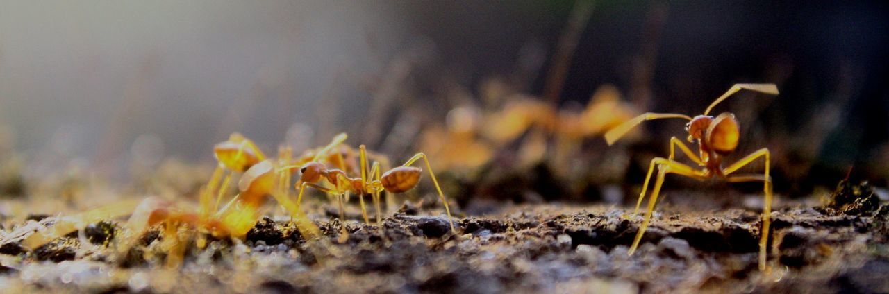 Ant Life Ant View Ants Antslife Beauty In Nature Close-up Day Fragility Freshness Nature No People