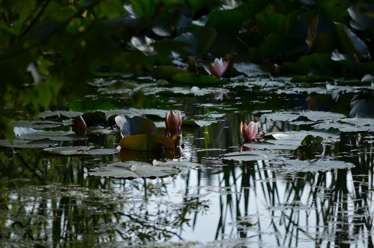 Animal Themes Beauty In Nature Bird Day Leaf Lilies Nature No People Outdoors Water