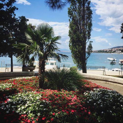 Paradise Sea Flowers Seaside Croatia