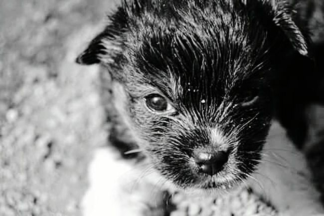 Cheese! Doglover Woff Monochrome Eye For Photography