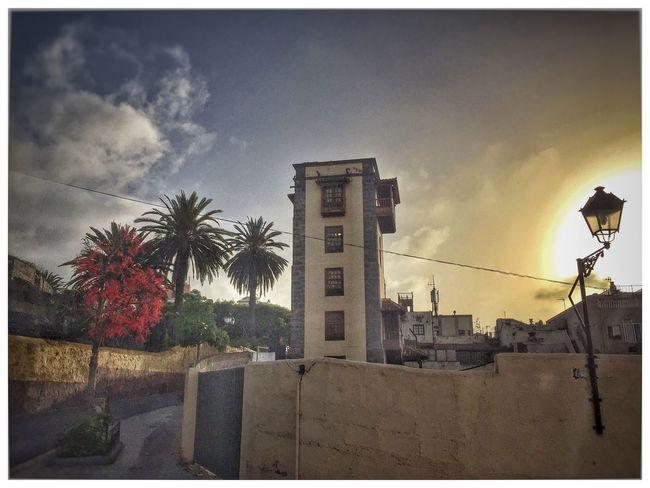 43 Golden Moments Puerto De La Cruz Tenerife Street Sunset Summer Golden Palm Tree IPhoneography