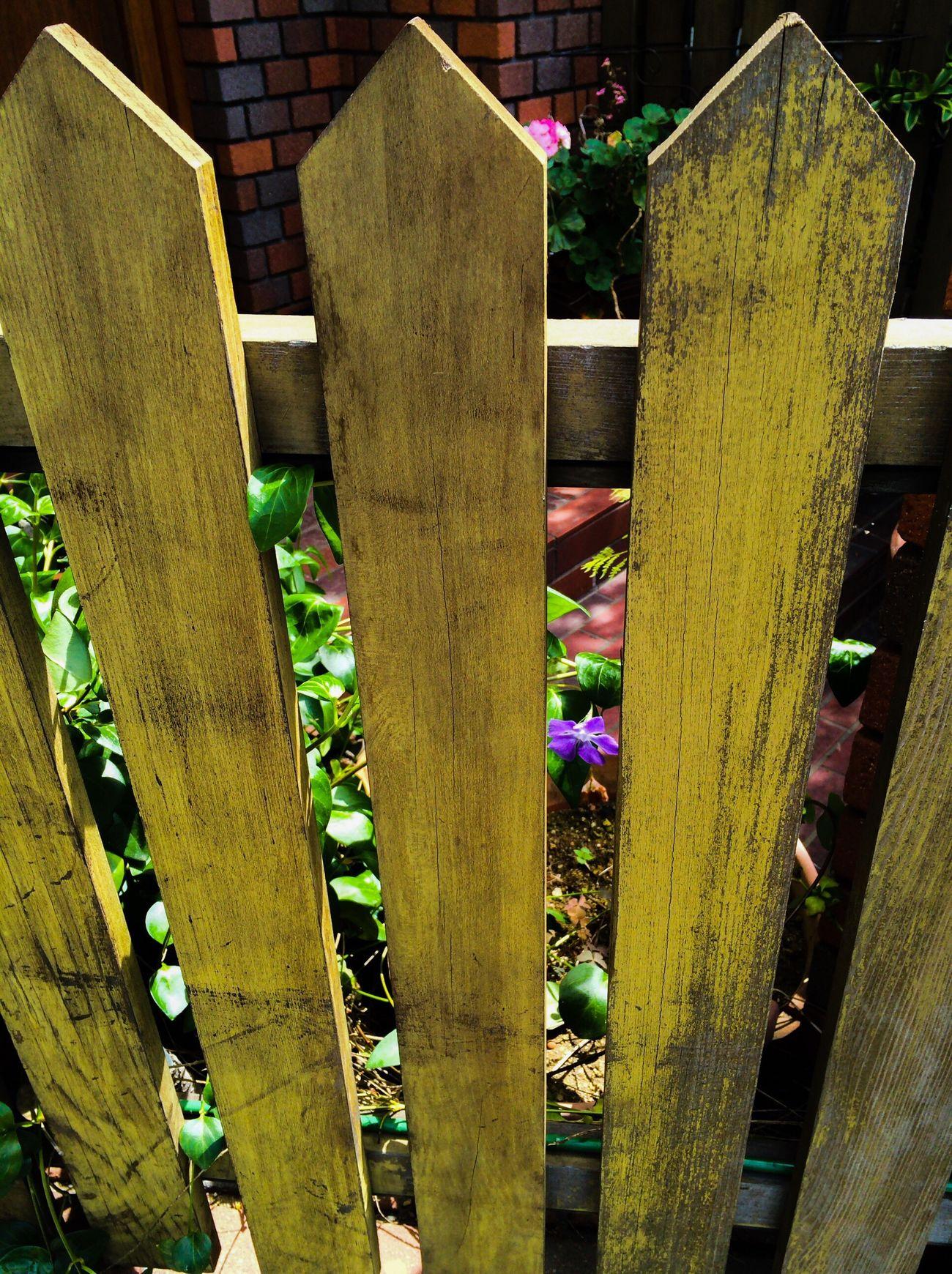 柵 Streetphotography Afternoonphotography Barrier