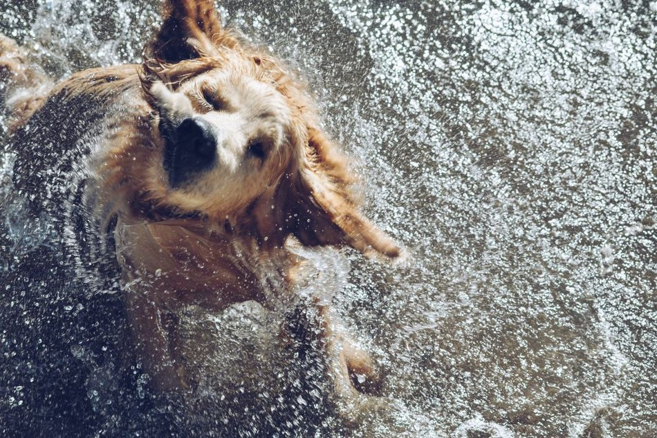 Beautiful stock photos of swimming,  Animal Themes,  Beige,  Close-Up,  Cute