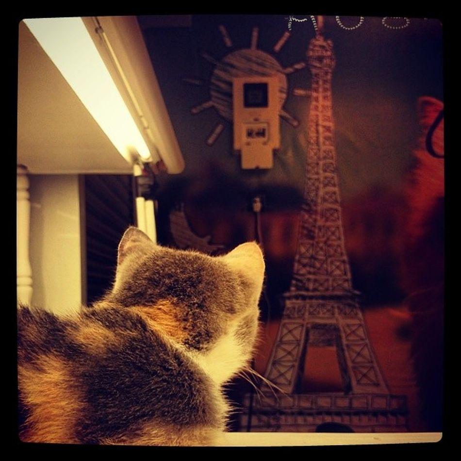 我的夢想不在巴黎...