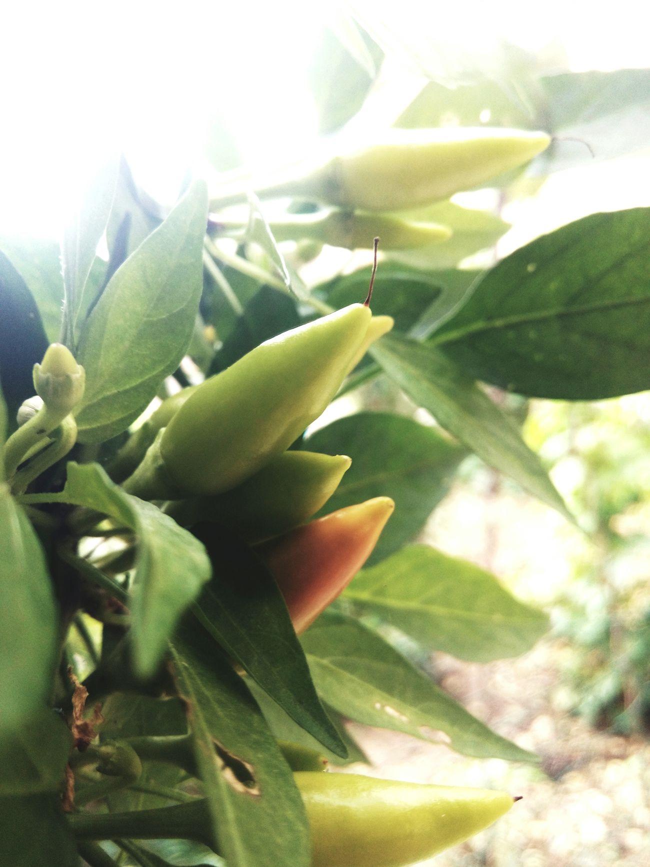 Yeşillik Tazelik Yalova Bahce
