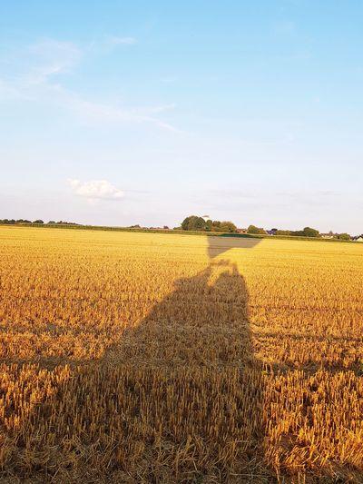 Agriculture Crop  Field Farm Rural Scene Cereal Plant Sky Food Outdoors No People Corn Growth Freshness Day Landscape Nature Flower SisterLovee ♥ Heißluftbalon :) Heißluftballon Danke  Balloon Ferien Danke  Ferien2017