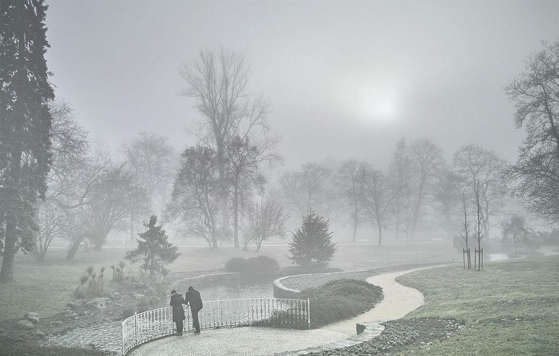 EyeEm Nature Lover Foggy Morning Landscape_Collection Landscape_photography Melancholic Landscape Park Urban Landscape Winter Wonderland