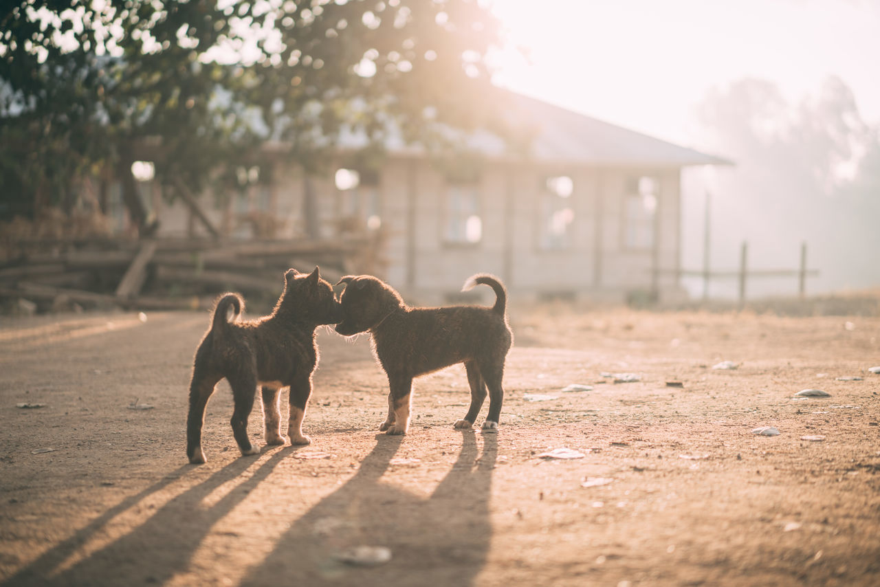 Beautiful stock photos of puppy,  Day,  Domestic Animals,  Field,  Mammal