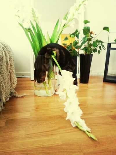 Flowerwater is so god! Drinking Water Flower My Crazy Cat Taking Photos