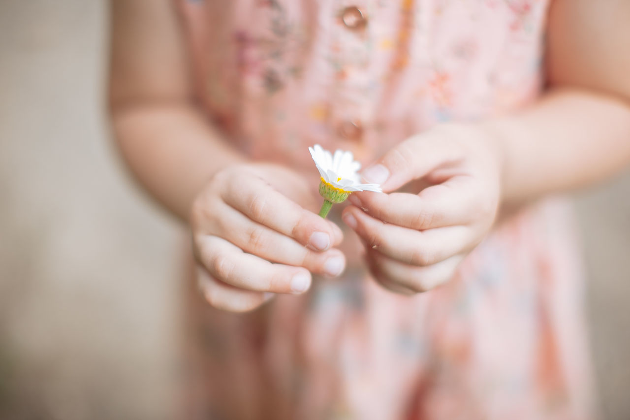 a little girl with a camomile Camomile Child Childhood Daisy Wheel Flower Girl Hands Holding Low Angle View Memories Nature Summer