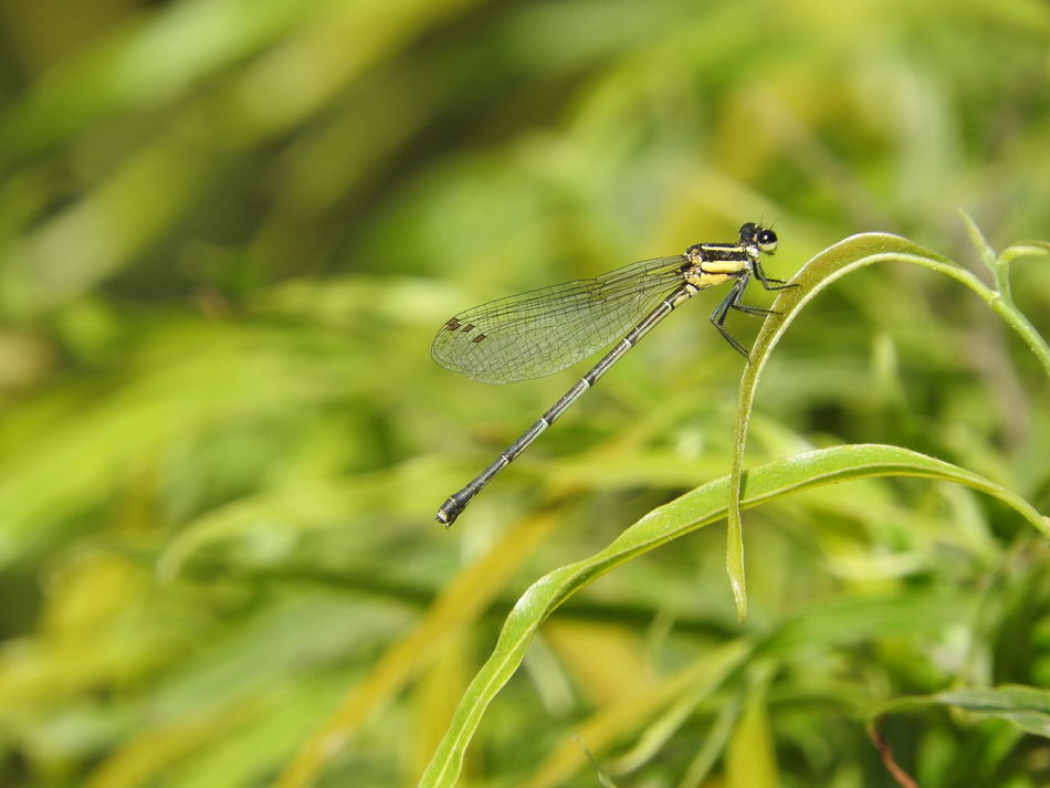 #Dragonfly Animal Themes Animal Wildlife Animals In The Wild Close-up Damselfly Green Color Insect Nature One Animal Outdoors Plant