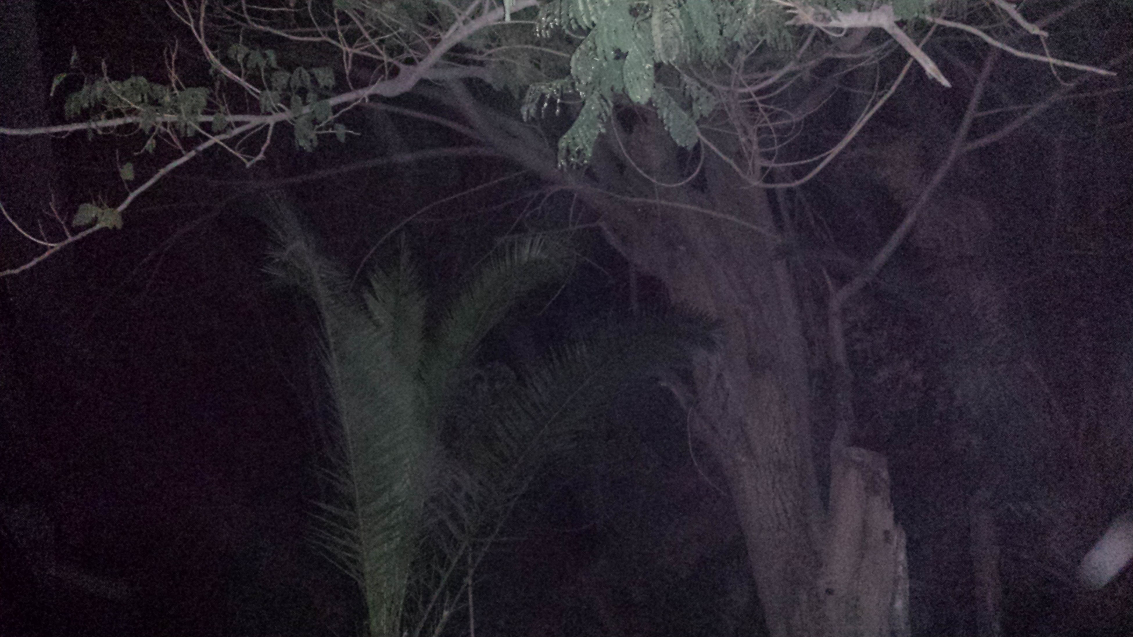 high angle view, growth, nature, plant, night, branch, leaf, tranquility, backgrounds, no people, dark, close-up, outdoors, full frame, beauty in nature, tree, forest, textured