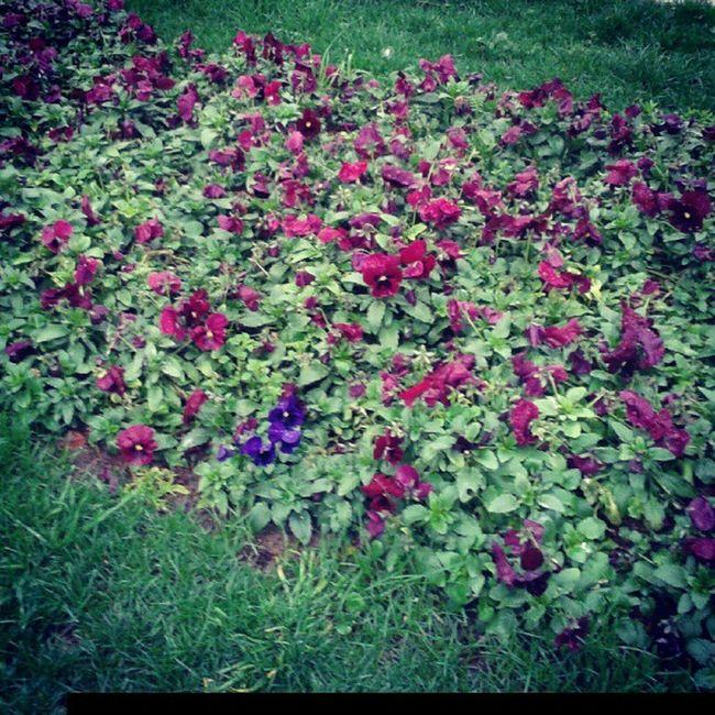 gungortumsa Flowertown Flowercity Flower Yalova Travel Turkey Türkiye Istanbul Instagram Insta Love Life Enjoy