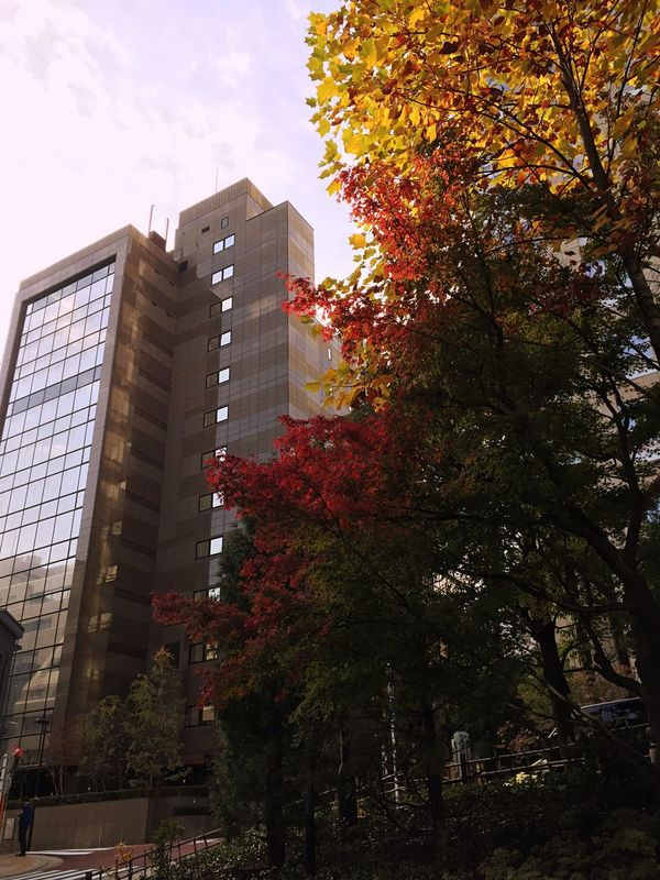 Beautiful autumn in the city Autumn Tree No People Outdoors City Day Red Yellow Color Season  Green First Eyeem Photo