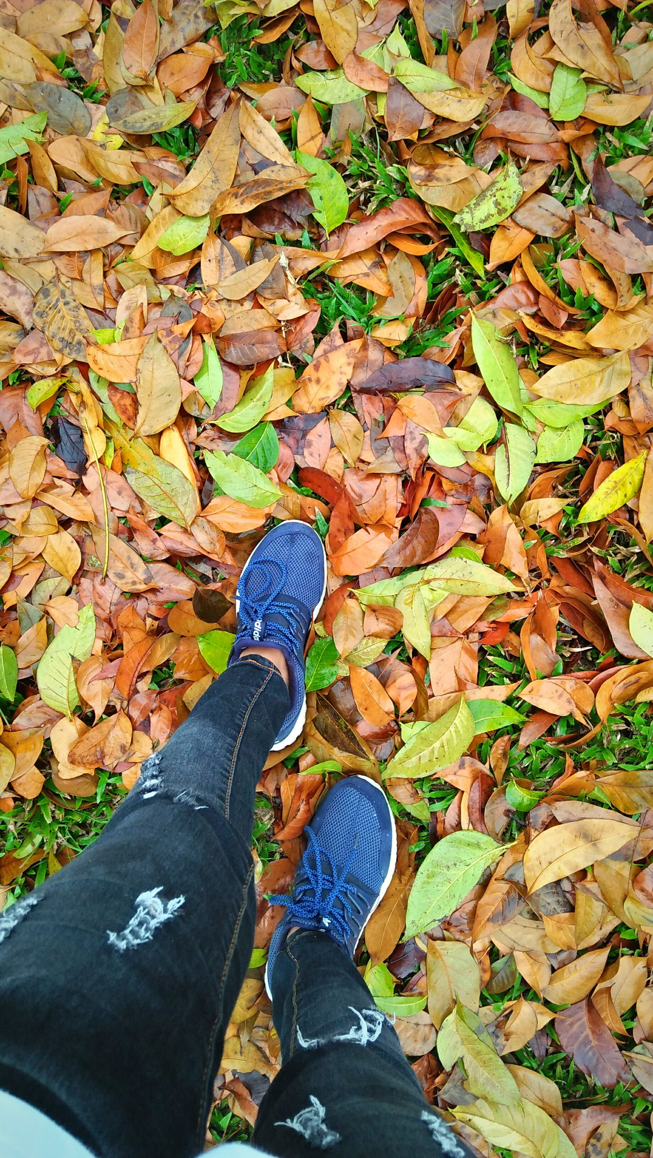 autumn, leaf, change, low section, shoe, human leg, one person, personal perspective, leaves, real people, high angle view, human body part, day, standing, fallen, outdoors, nature, lifestyles, men, beauty in nature, close-up, adult, people