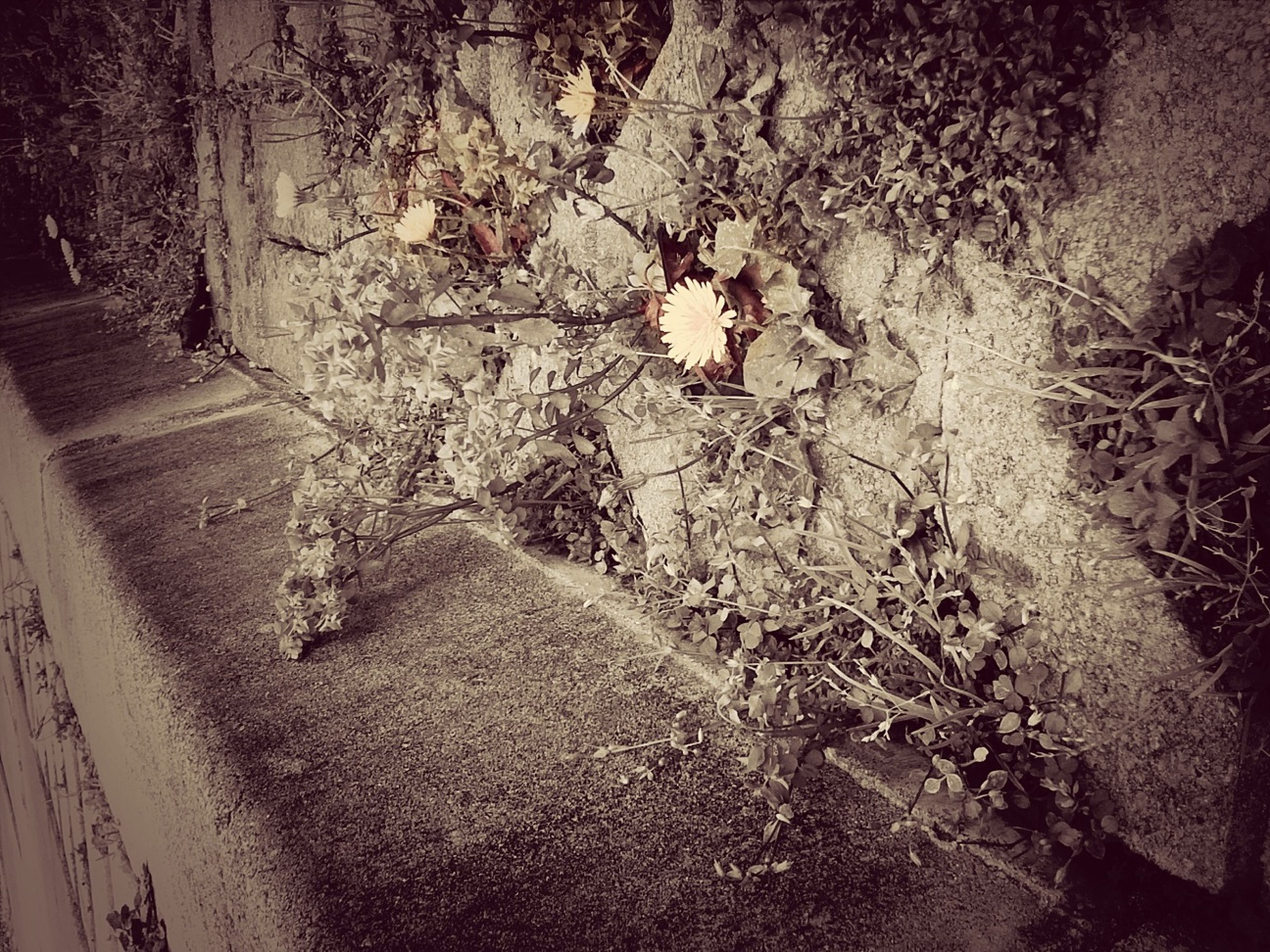 wall - building feature, built structure, architecture, high angle view, shadow, street, sunlight, wall, no people, outdoors, day, building exterior, plant, messy, nature, growth, textured, abandoned, footpath, tree