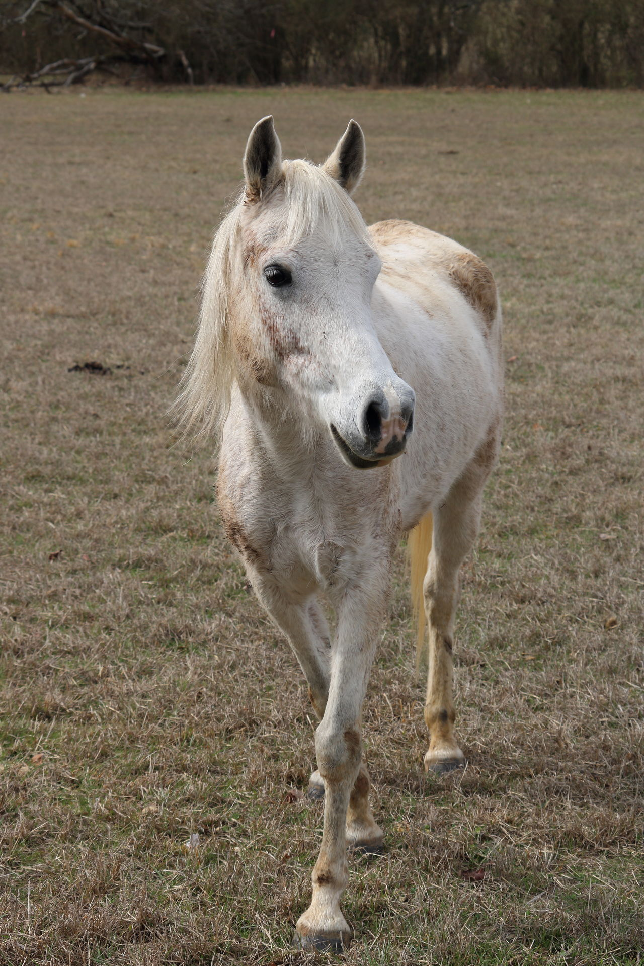 Dirtyhorse Animal Themes Field Nature Mammal No People One Animal Grass Landscape Outdoors Domestic Animals Day Beauty In Nature Friendly Faces