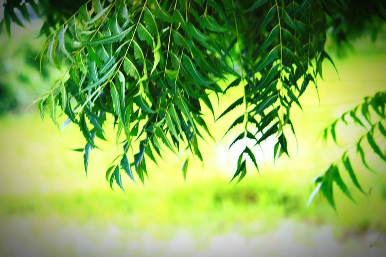 Nature Outdoors Green Color Plant Day Tree Growth No People Beauty In Nature Rural Scene Close-up Freshness Green Color Grass Full Length Focus On Foreground Beauty In Nature Selective Focus Plant Nature Leaf Tree Flower Head