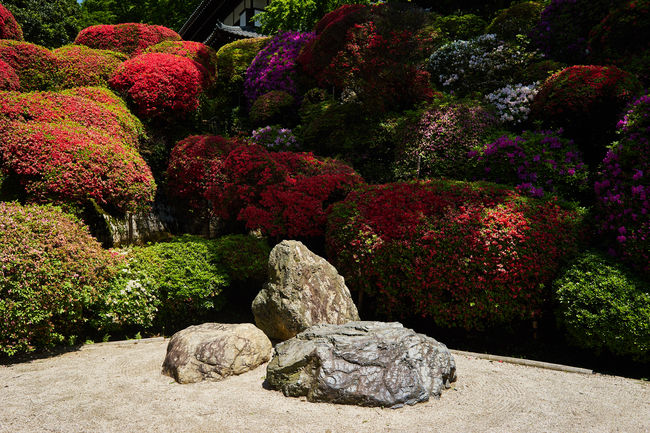 Azalea Beauty In Nature EyeEm Nature Lover Green Color Growing Growth Japan Multi Colored Nature Nature Photography Nature_collection No People Non-urban Scene Plant Rock - Object Stone - Object