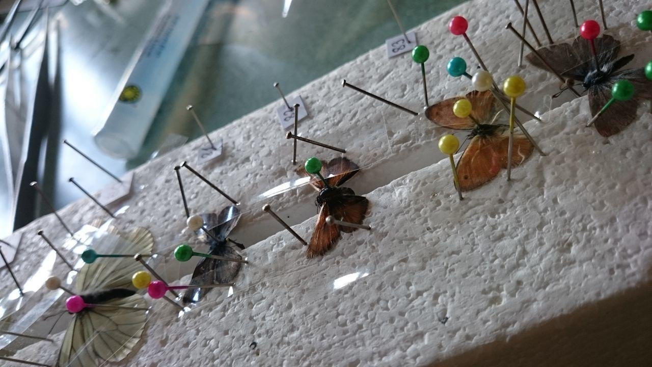 Animal Themes Biology Class Butterfly Collection Invertebrate Invertebratezoology Lepidoptera Zoology Zoologylab