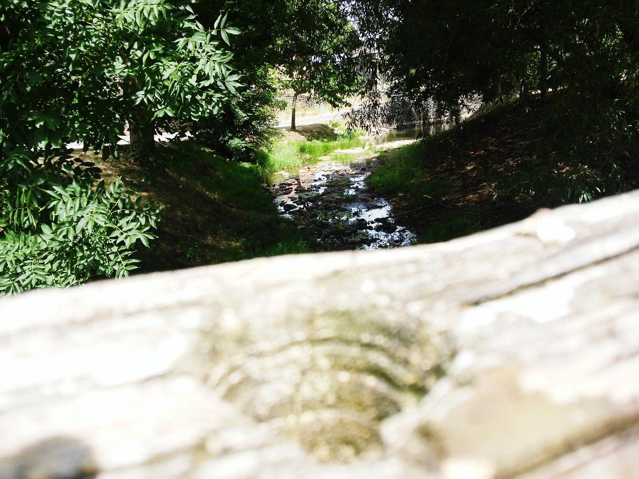 Rivera Riviere Cantal Coltine Auvergne Ruisseau