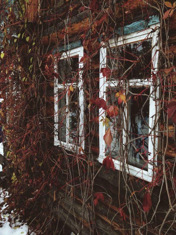 осень листья дача