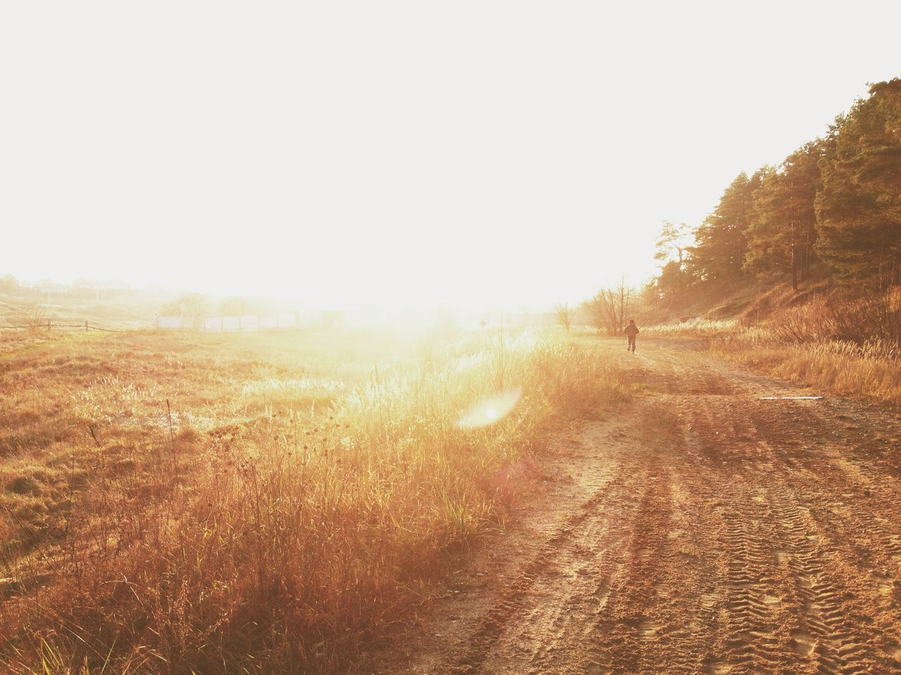 Beautiful stock photos of moscow, Beauty In Nature, Copy Space, Day, Dirt Road
