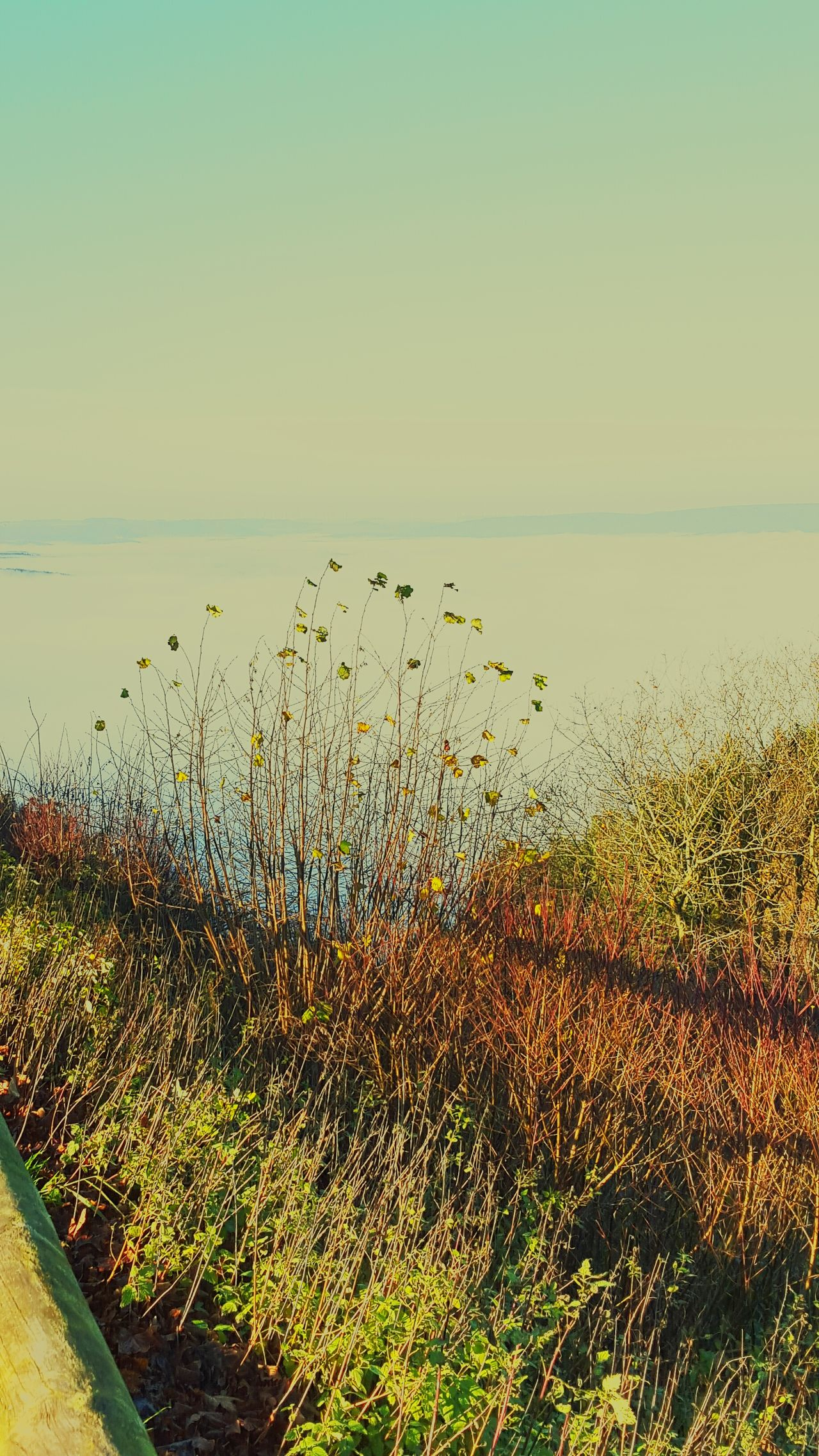 Leaves Lakeofclouds Seaoffog Fall_collection Fall Foggy Foggy Morning Seaofclouds Fog Fall Beauty Branch Twig Nature Beautiful Nature
