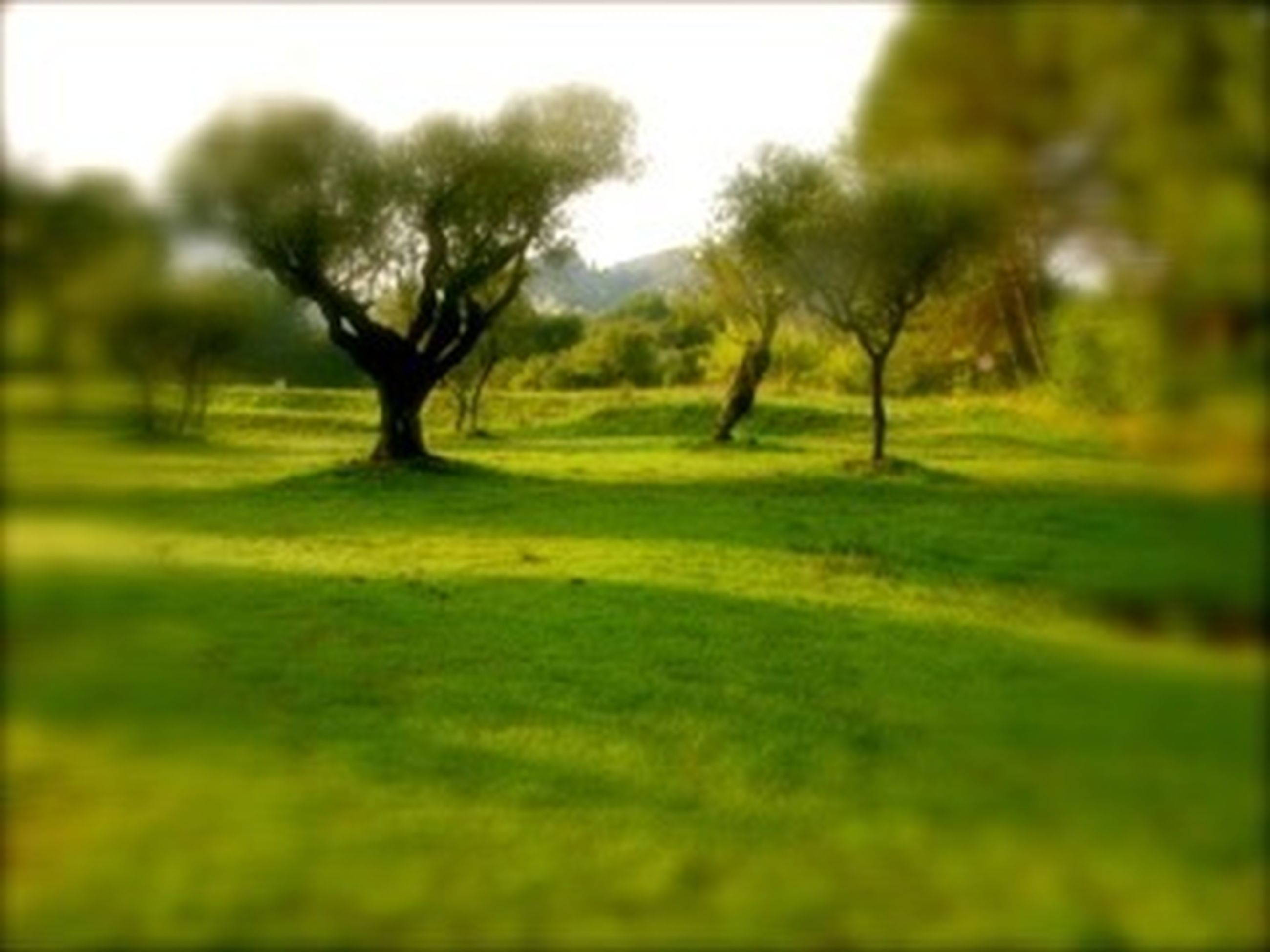 tree, grass, tranquility, field, green color, growth, tranquil scene, landscape, nature, grassy, beauty in nature, selective focus, scenics, day, no people, outdoors, non-urban scene, auto post production filter, sunlight, focus on foreground