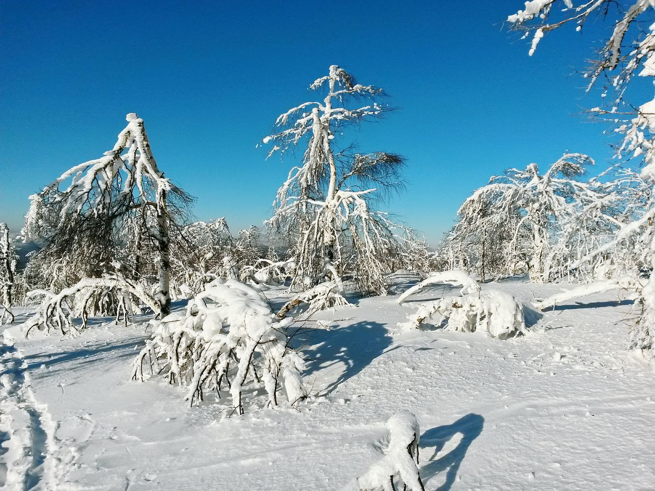 snow, cold temperature, winter, blue, white color, nature, tranquil scene, frozen, white, tranquility, outdoors, beauty in nature, clear sky, tree, scenics, day, landscape, sunlight, no people, mountain, sky, bare tree
