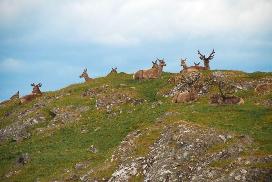 Kincraig Highland Wildlife Park Highlands Scotland Deer Aminal Hillside Nature Nature Photography