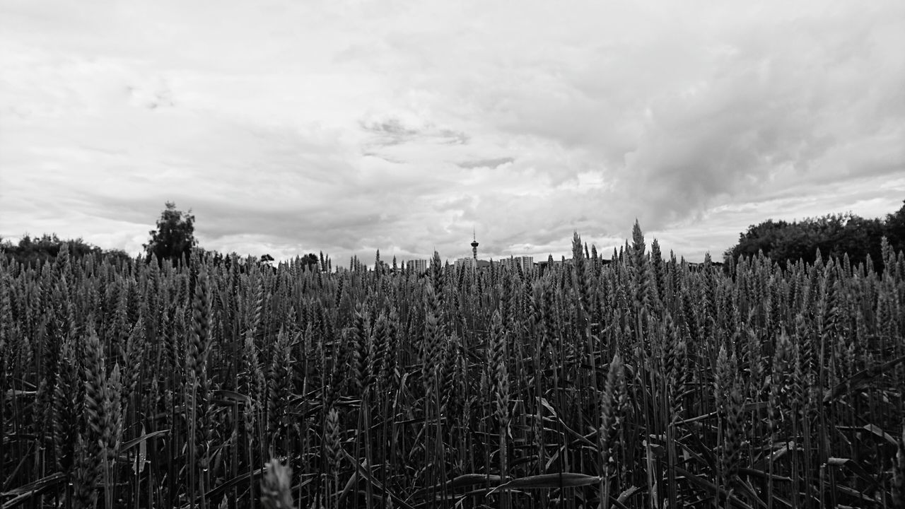 Blackandwhite Photography Fields Outdoor Photography Natural Beauty Distant Buildings Tyholttarnet Trondheim Norway