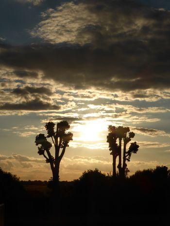 Silhouette Coucher De Soleil Arbre Ciel Tranquility Scène Tranquille Beauty In Nature Nature Contour Nuageux Sombre Ciel Spectaculaire Majestueux Paysage Orange Orange Color Exterieur Idyllique Extérieure