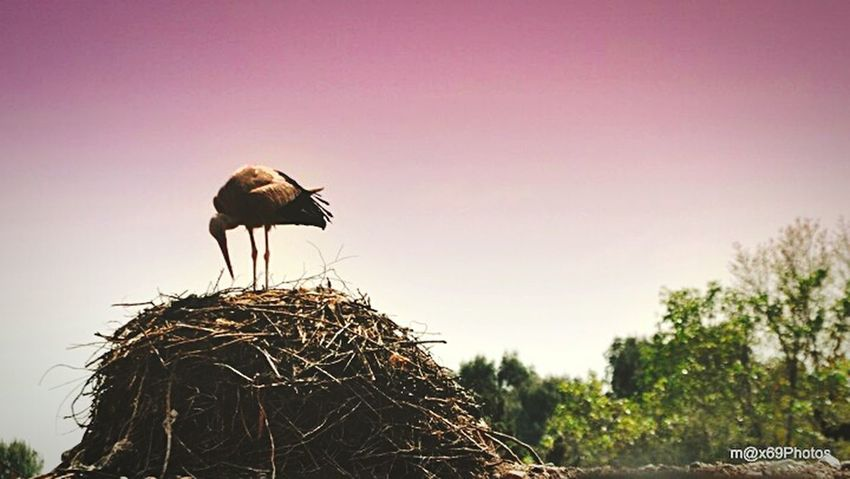 STORK WHILE THEY 'RE NESTING!!! Taking Photos Check This Out Enjoying Life Hello World Cicogna Marocco